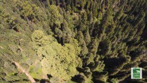 drone service california